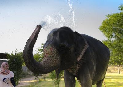 Elefantastic-12
