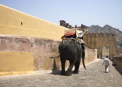 Jaipur-51
